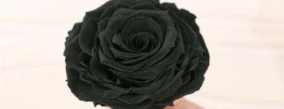 ¿Cómo elegir las flores adecuadas para un velorio?